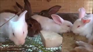 Учет кроликов Кролики в яме часть 9 Иркутск(Про программу учет кроликов записать не успел, будет готова на неделе отделенным видео. Кролики в яме часть..., 2016-07-31T17:16:38.000Z)