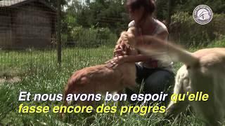 Video CHEYENNE ou le sauvetage d'un petit amour download MP3, 3GP, MP4, WEBM, AVI, FLV Januari 2018