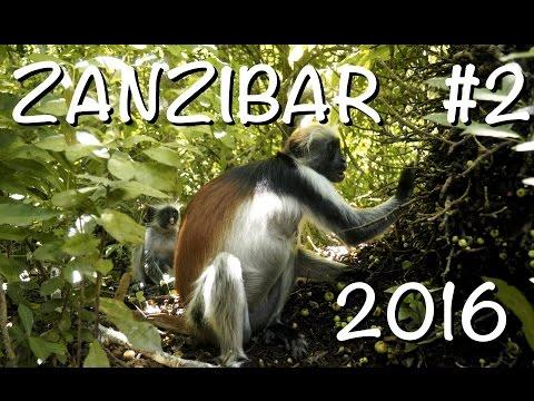 Dovolená na Zanzibaru 2  - Jízda na skůtru, Blue lagoon potápění, Jozani Forest, Skákání do vln