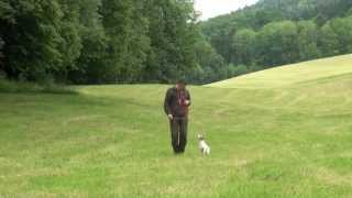 Hundeerziehung Dogtraining Leinenführung Nach Fichtlmeier