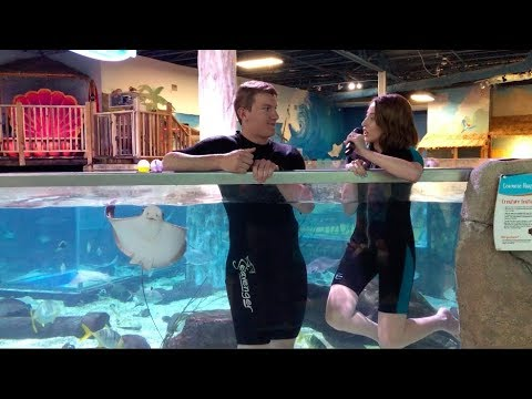 SeaQuest Aquarium (Animal Interactions, Fish Pedicures, Behind The Scenes)