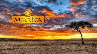 Malaika Camp  - Safari Abenteuer in der Masai Mara, Kenia - Trailer
