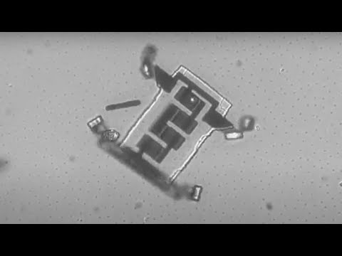 Crean microbots capaces de caminar de forma autónoma