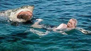 Нападение морских животных на людей (2016) Шок