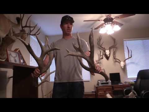 WORLD RECORD MULE DEER SHEDS!!