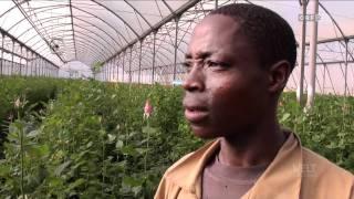 11.01.2012 Weltjournal Fairtrade Fairen Handel ? 720p HDTV
