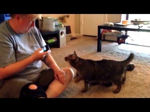 """O que acontece quando você se comunica pelo App """"Tradutor Gato"""""""