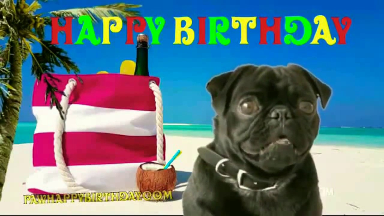 Happy Birthday Pug At The Beach