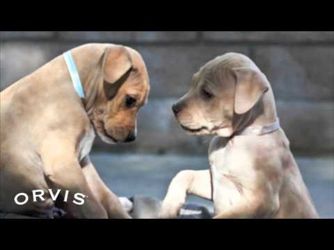 Orvis Cover Dog Photo Contest Highlights 2011