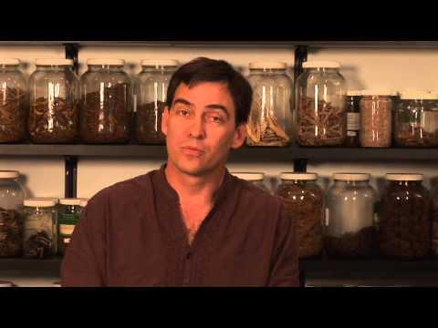 Herbal Remedies for Toe Fungus