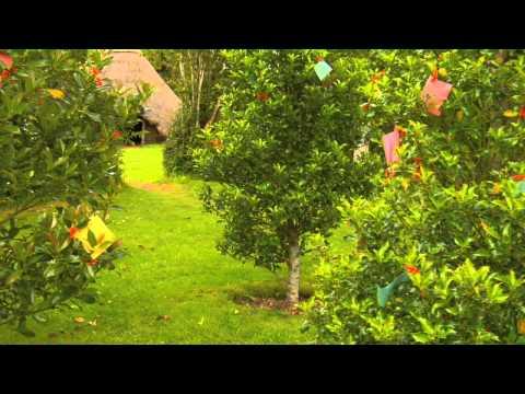 Welcome to Brigit's Garden