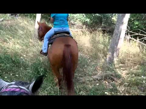 sorrel trail horse