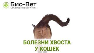 Болезни Хвоста У Кошек & Чем Грозит Травма Хвоста Для Кошки. Ветклиника Био-Вет