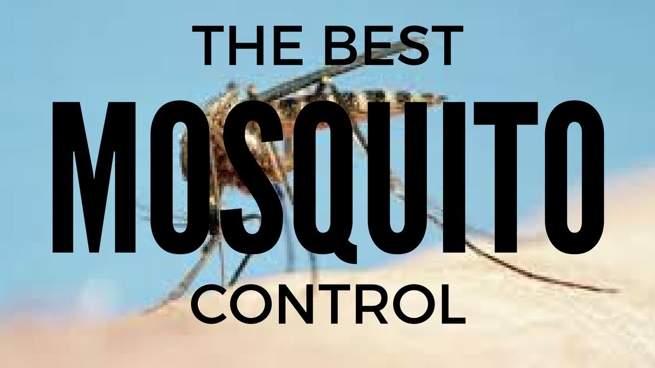 the best mosquito control in charleston south carolina southern