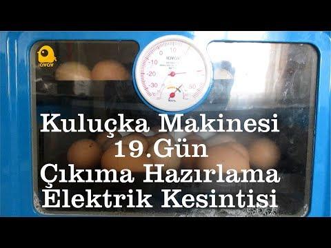 Kuluçka makinesi  QTM 060p19. gün çıkım ve elektrik kesintisi