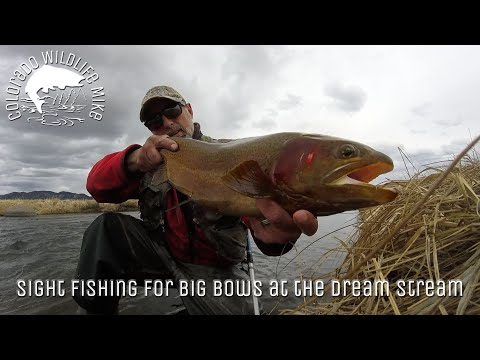 Sight Fishing For Big Bows At The Dream Stream