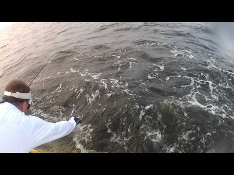 Tarpon Caught in the Pamlico River North Carolina