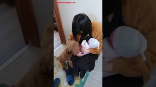 CHINESE FUN Cute Funny Dog Puppy Videos Compilation No.19 2018
