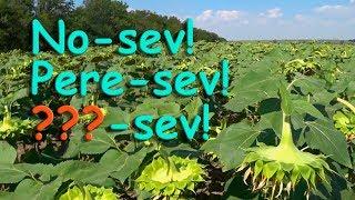 Три секретных технологии выращивания подсолнуха!