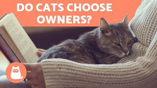 How Do CATS CHOOSE Their HUMAN? ♀ Find Out!