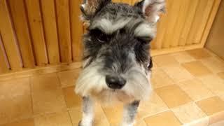はぴから犬につき、里親さん募集中です http://www.pets-hop.com/