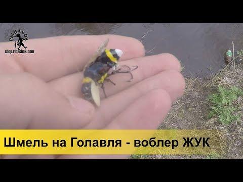 Шмель – лучший воблер жук на голавля весной