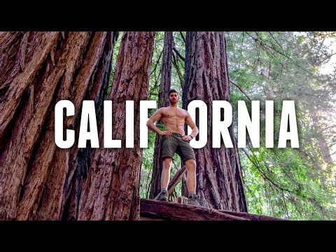 What to do in CALIFORNIA | REDWOOD FOREST