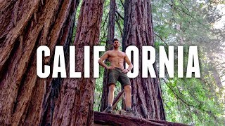 California Road Trip TRAVEL GUIDE   REDWOOD FOREST