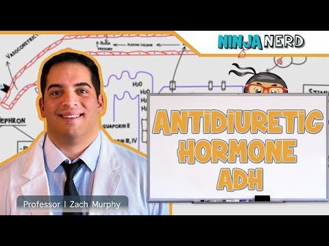 Endocrinology | Antidiuretic Hormone (ADH)