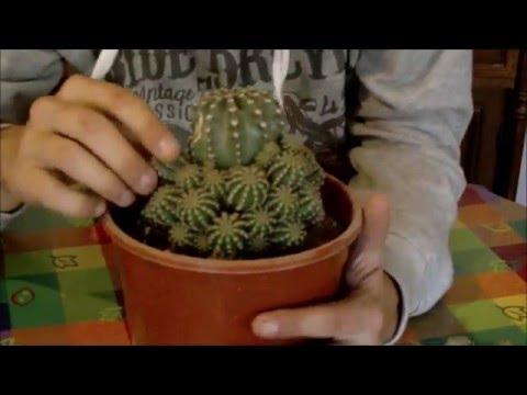 Reproducción de cactus en INVIERNO