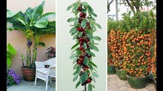 7 Árvores Frutíferas que pode plantar em Vasos Facilmente