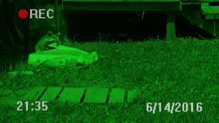 Raccoon caught on night vision security camera escapes with 28 pounds of cat food