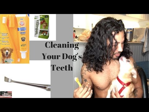 Clean Your Dog's Teeth at Home (links to tools in description)