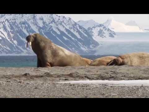 rolf-stange---spitzbergen.de---lofoten-bäreninsel-spitzbergen,-22.5.-05.6.2015