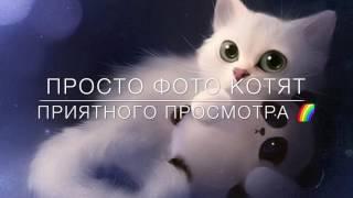 Просто фото котят | Милые фото няшных котиков 😽 | ksyushka_Cats