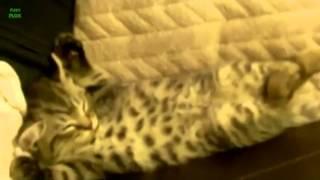 спящие коты продолжение
