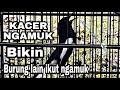 Kacer Ngamuk Burung Lain Ikut Ngamuk  Mp3 - Mp4 Download