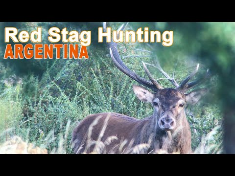 Red Stag Hunting In Argentina - Patagonia / 2018