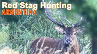Red Stag Hunting (chasse) In Argentina - Patagonia with Ovini Expeditions