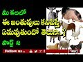 dream predictions in telugu l Meaning of dreaming with animals part 2 l rectvmystery