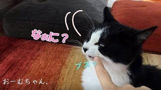 Line@:猫好きなお友達募集中! 更新情報やYoutubeのやり方など、気軽に...