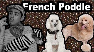 French Poddle, Poddle, Caniche - Caracteriaticas