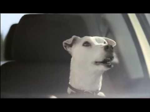 Polo - Singing Dog