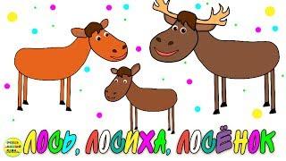 Учим диких животных:  лось, лосиха, лосёнок! Развивающие мультфильмы о животных