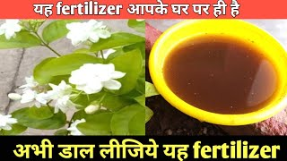 Organic fertilizer for Jasmine for more flower | मोगरा पर ज्यादा फूलों के लिये खाद