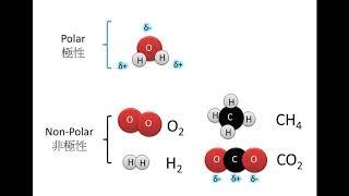 DSE Bio 極性/親水性 VS 非極性/疏水性 Polar / Hydrophilic VS Non-Polar / Hydrophobic