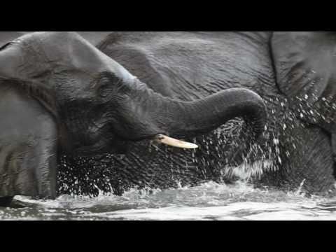 Africa Wild Lodges and Safaris - Botswana