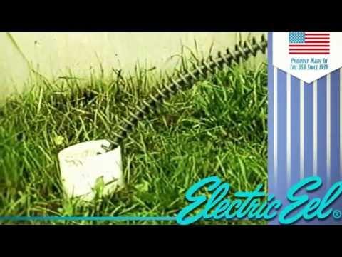 Прочистка канализации Electric Eel (Электрик Ил) - США | Www.tool-tech.ru