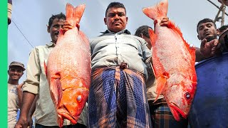 Bizarre Bangladesh!! Uncovering Chittagong's Food Secrets!!