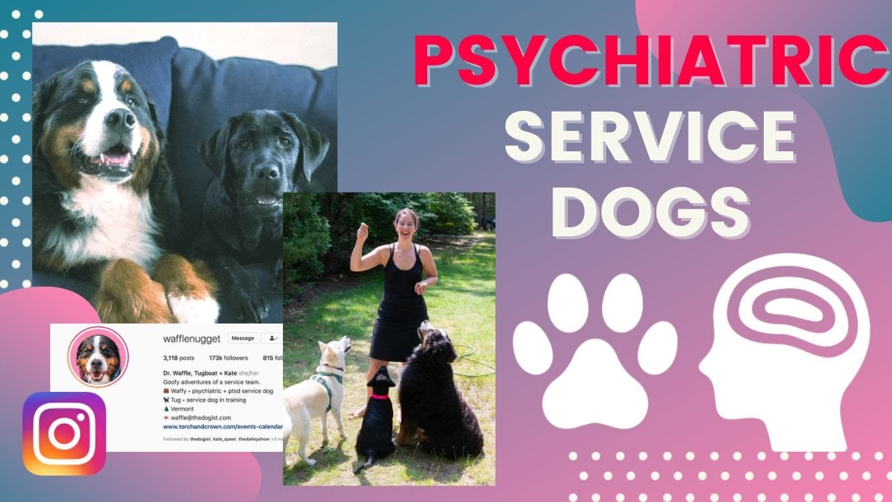 Download psychiatric service dogs | KATE SPEER